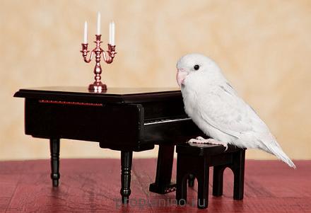 Учимся играть на фортепиано