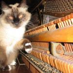 Зачем педали на пианино