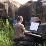 Бетховен на пианино для слепых слонов