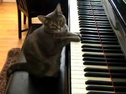 5 интересных фактов о фортепиано (Часть 1)